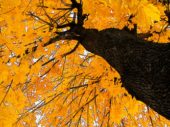 Autumn by Dani-the-Naiad