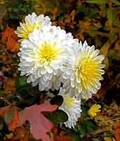 Fall Beauty by Dani-the-Naiad