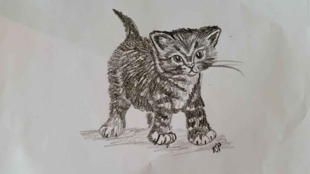 Kitten by Dani-the-Naiad