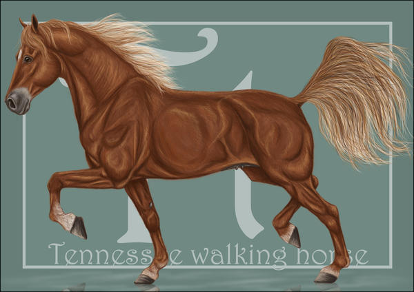 http://fc05.deviantart.net/fs71/i/2010/148/4/a/T_Tennessee_walking_horse_by_Emlis.jpg