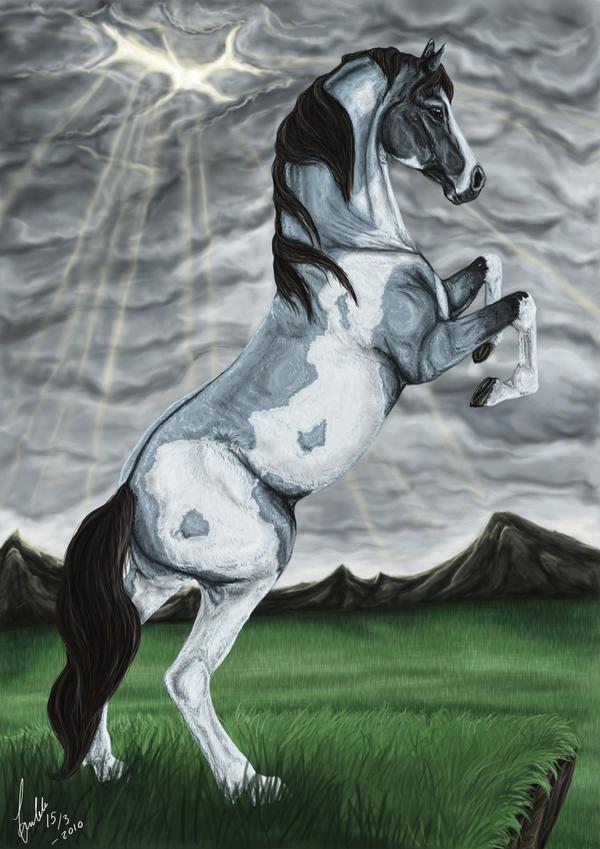 Blue Roan Overo Horse
