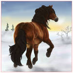North-Sweden horse in snow