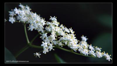 puritatea albului by Botosani
