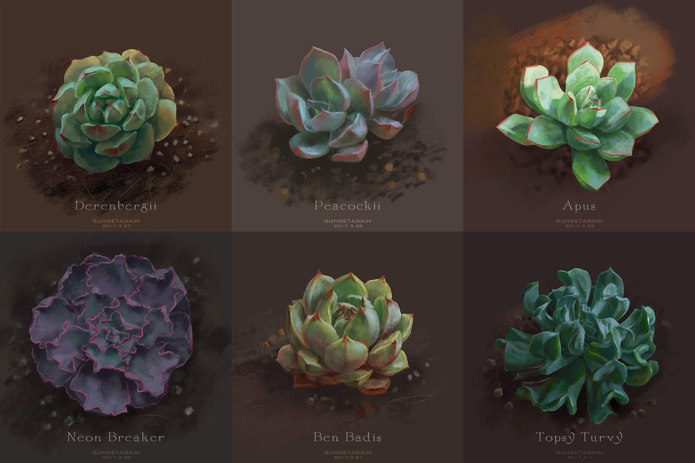 Succulent sketches 1 by sunsetagain