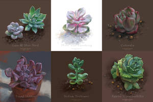 Succulent Sketches 2 by sunsetagain