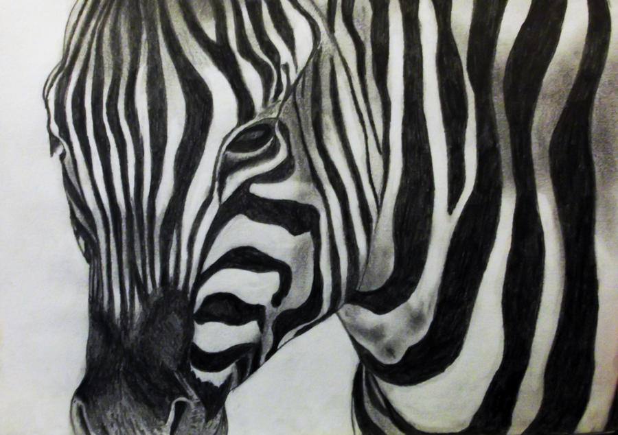 Zebra Drawing Pencil Drawing Of A Zebra by
