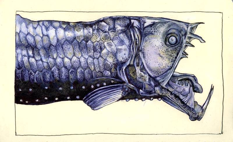 moleskine : viperfish by Cephalopodwaltz