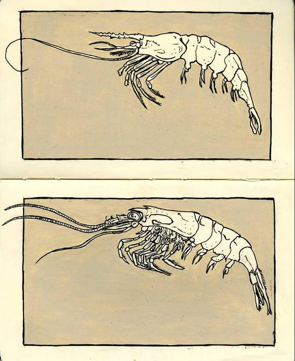 moleskine : shrimp by Cephalopodwaltz