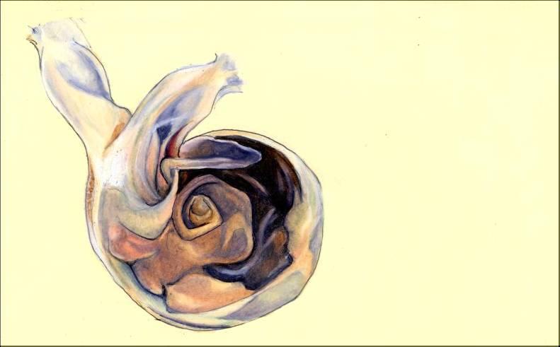 moleskine - pteropod love by Cephalopodwaltz