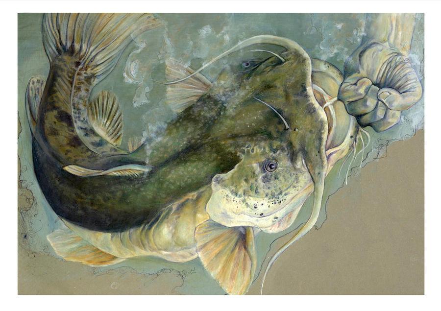 catfisting illustration by Cephalopodwaltz