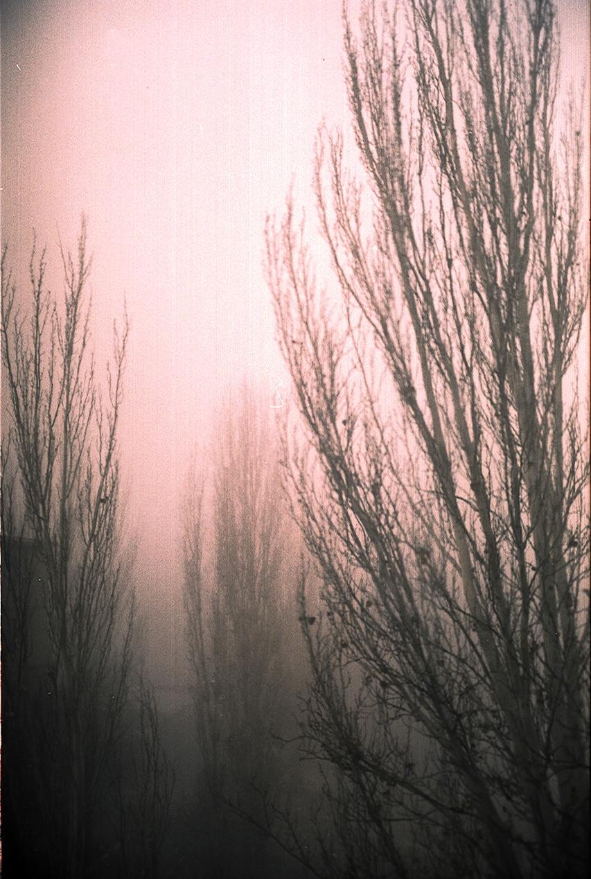 fog by NanaOsaka