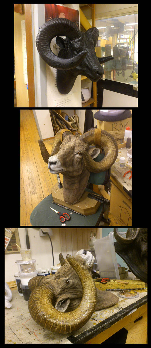 Bighorn makeover by ZombieArmadillo