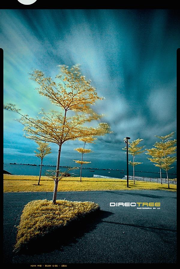 Treebute 02 - DirecTREE by lxrichbirdsf