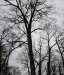Trees Upon A Gloomy Sky