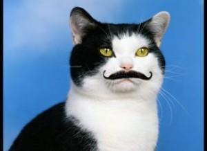 Monycat's Profile Picture