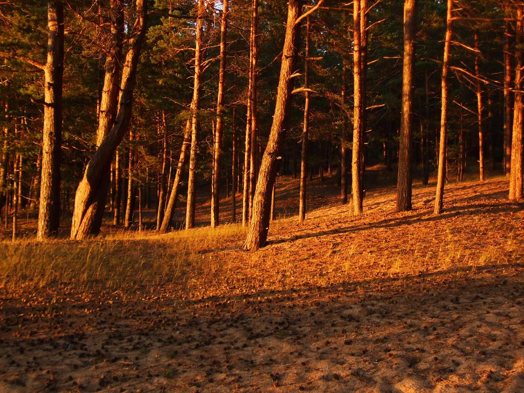 golden pine tree forest by expressive87 on deviantart