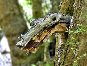 Wood snake