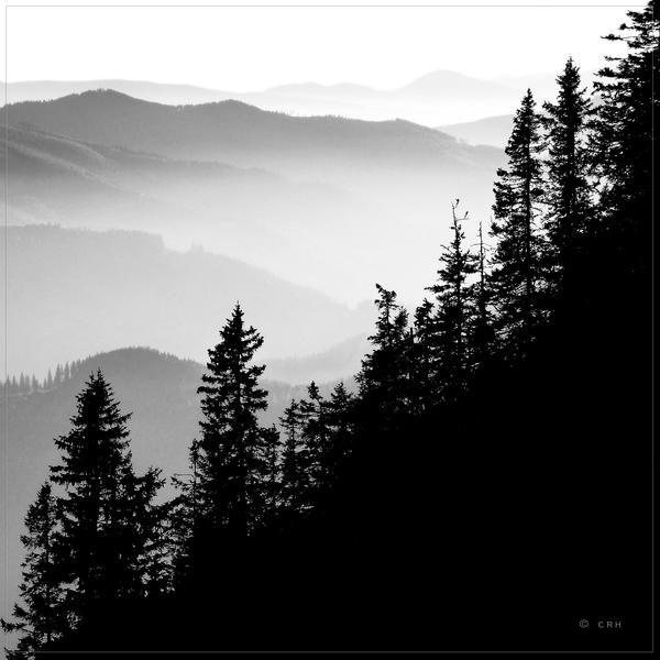 treescape by crh