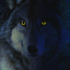 Wolf Blue 100x100 by ScaperDeage