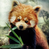 Red Panda 100x100 by ScaperDeage