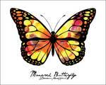 Animal - Monarch Butterfly
