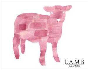 Animal - Lamb