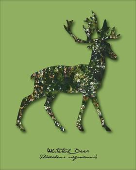 Pride Month - Green (Deer/Stag)