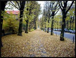 Fallen leaves by zdzichu