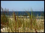 Grass 'n' Sea