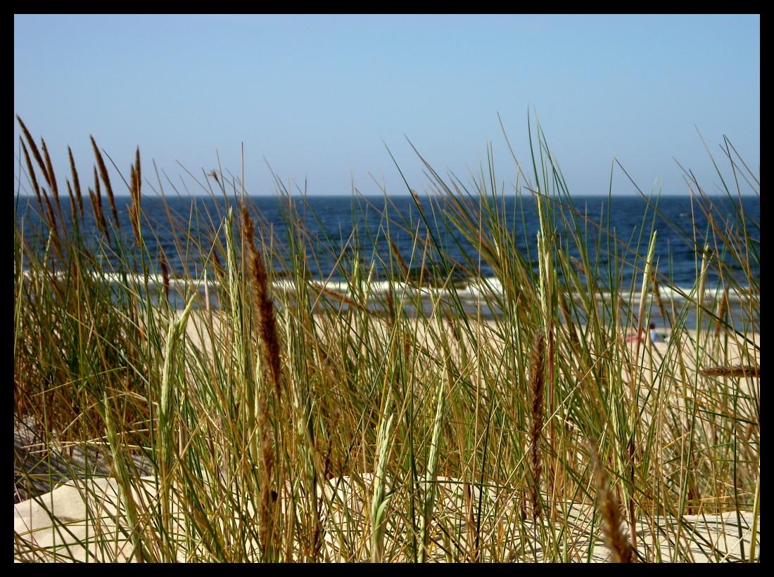 Grass 'n' Sea by zdzichu