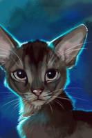 abyssinian warm-up by kinpatsu-cat