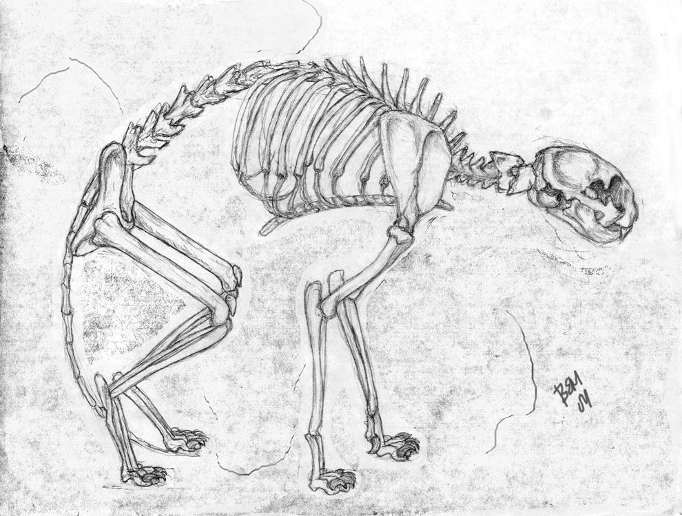 Skeleton sketch by jackal-god on DeviantArt