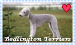 Bedlington Terrier Stamp by coyearth