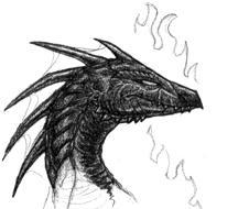 Black dragon by drakky