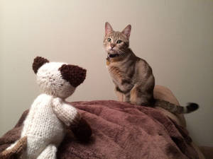 Cat vs. Cat II