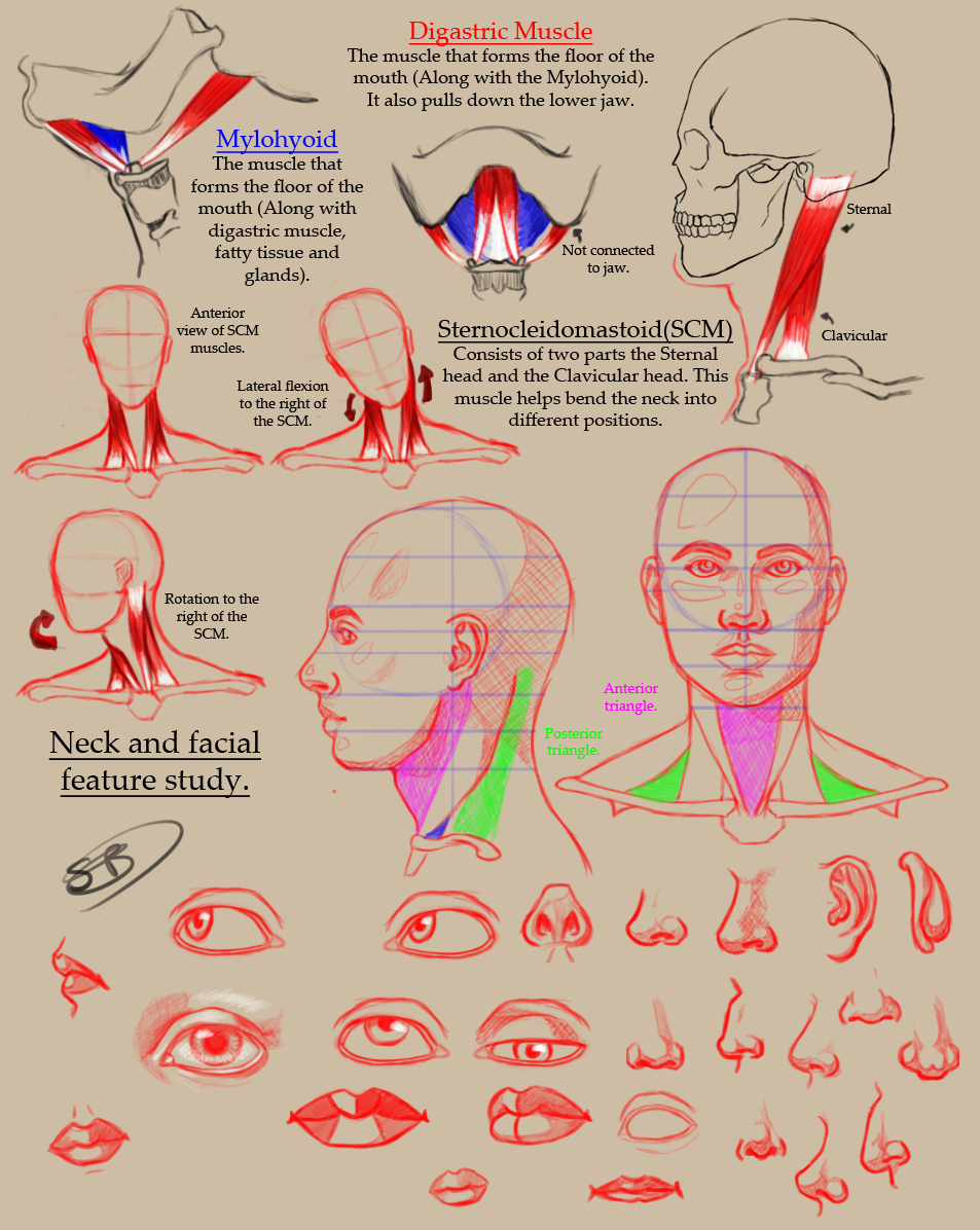 Neck and facial feature study