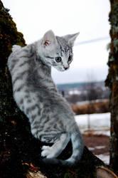 CAT by empp-U