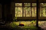 Orphanage Duinen-Heide
