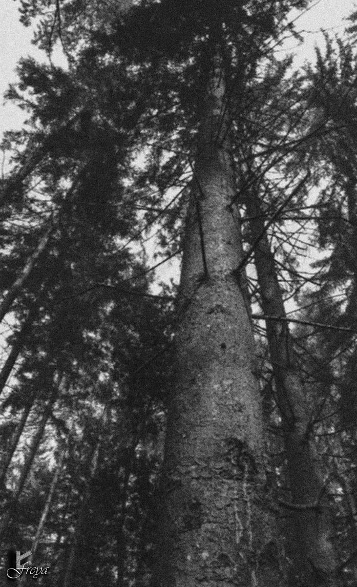 Tree by AuroraxxBorealis