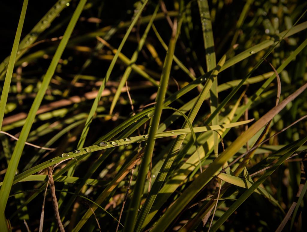 Grass by AuroraxxBorealis