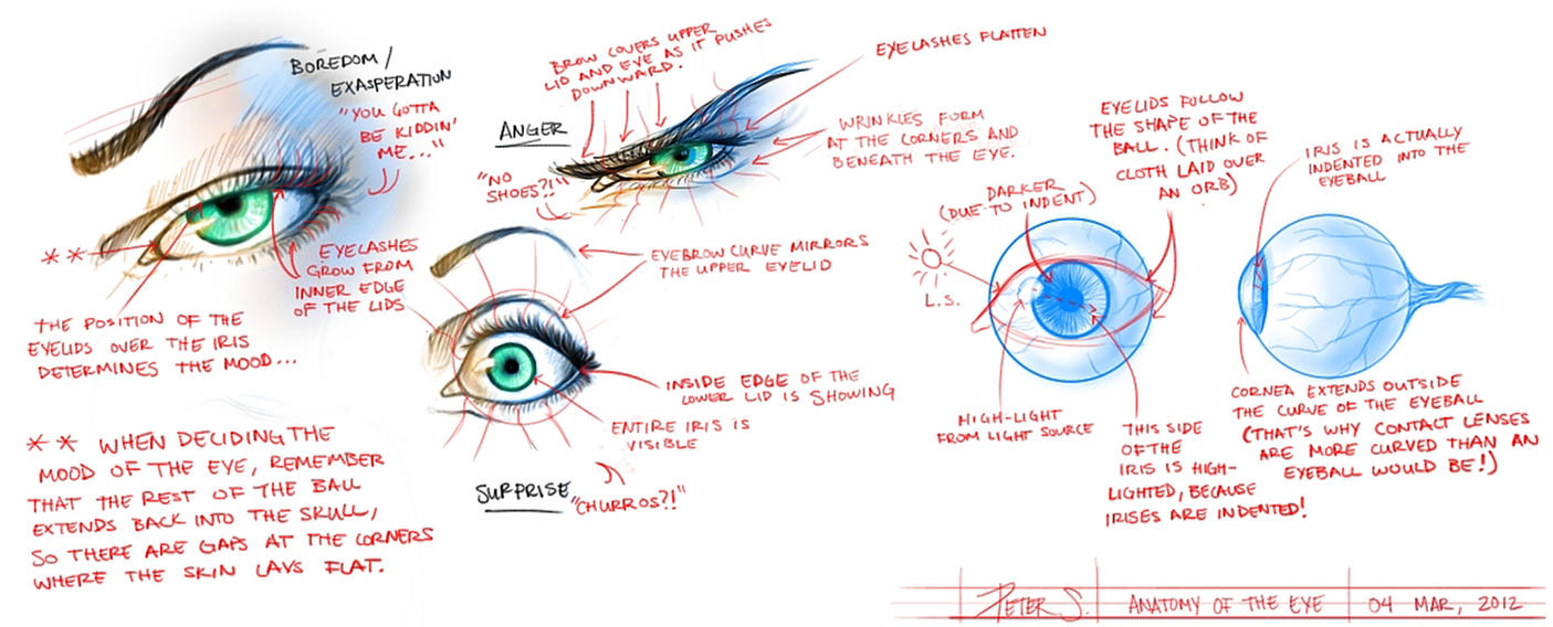 Eye anatomy study by TheWizpir on DeviantArt