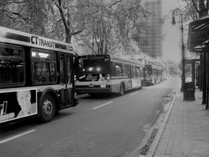 Buses in New Haven