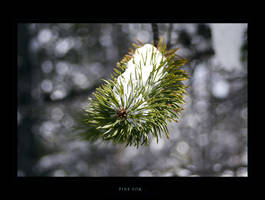 Pine for... by Ito6