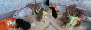 My family of rabbits 2016