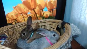 Happy bunnys 2017