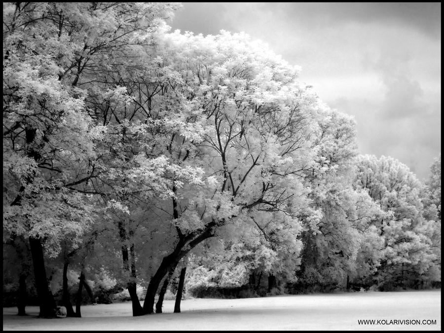 Some black and white infrared by ilimel