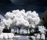 Straightforward Path Infrared by ilimel