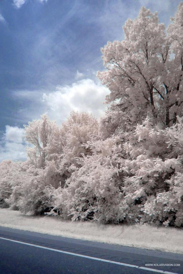 Infrared V by ilimel