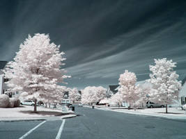 Infrared VIII by ilimel