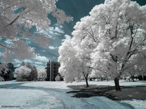 Dreams in Infrared